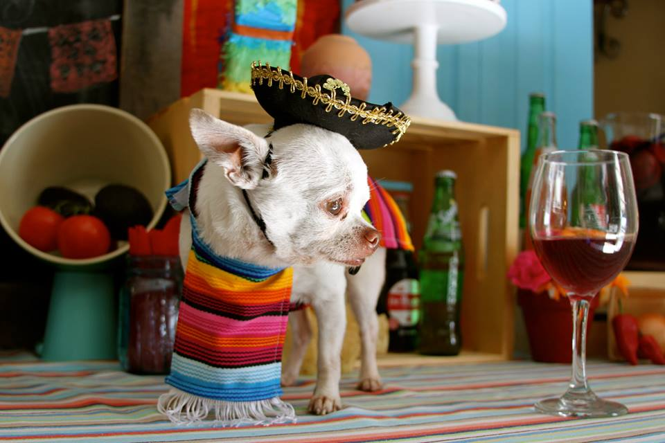 Cinco De Mayo Party Everyday Party Magazine